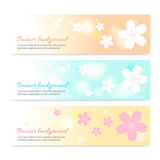 Set of spring banner background with cherry blossom Stock Image