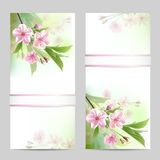 Set of spring banners. With blossoming tree branch with pink flowers. Vector illustration Royalty Free Stock Image