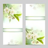 Set of spring banners. With blossoming tree branch with white flowers. Vector illustration Stock Photo