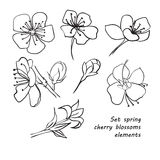 Set of spring cherry blossom flowers. Hand drawing. Stock Image