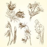 Set of spring flowers. Spring flowers - hand drawn collection Stock Photo