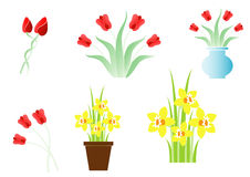 Set of spring flowers. Set of six different tulips Royalty Free Stock Images