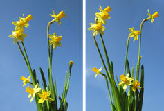 Set. Spring flowers on a background of blue sky. Photo Stock Images