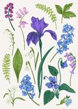 Set with spring flowers. Set with blue spring and summer flowers. Botanical vector illustration. Vintage. Colorful Vector Illustration