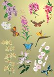 Set of spring flowers and butterflies Stock Photography
