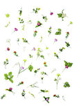 Set of spring flowers isolated on white background Stock Images