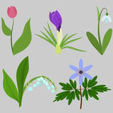 Set spring flowers. Tulips, crocuses, snowdrops, lilies, anemone Stock Photography