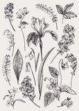 Set with spring flowers. Vintage botanical illustration. Vector floral elements. Black and white Stock Illustration