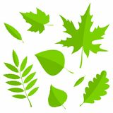 Set of Spring Leaves in flat style  on white background. Vector Illustration. Set of green Spring Leaves in flat style  on white background. Vector Illustration Stock Photos