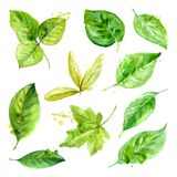 Set of spring leaves watercolor with blots of paint. Vector illustration Royalty Free Stock Photo