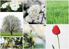 Set of spring photos Royalty Free Stock Images
