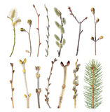 Set of spring tree branches with buds isolated on white background. Different tree branches. Isolated on white background stock photography