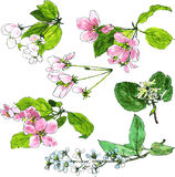 Set of spring tree flowers Stock Photography