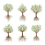 Set of Spring Trees with Roots. vector illustration