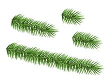 Set of spruce branch isolated on white background. Green fir. Realistic Christmas tree. Vector illustration for Xmas cards, banners, flyers, New year party Stock Images
