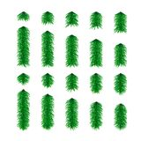 Set of spruce elements isolated on white background. Vector. Illustration Royalty Free Stock Images