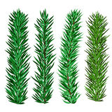 Set of spruce and fir tree branches - christmas elements. For realistic design and brushes Stock Photos