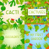 Set of 4 square banner templates with cactuses and succulents. Home cactus plants with prickles and flowers. Exotic. Set of 4 square vector banner templates with Royalty Free Stock Photos