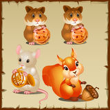 Set of squirrel with hamsters and mouse. Set of cute squirrel with hamsters and mouse Stock Photo