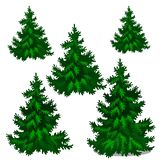 The set of stages of growing spruce or Christmas tree isolated on a white background. Vector cartoon close-up. Illustration vector illustration
