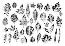 Set of stamp different leaves vector illustration