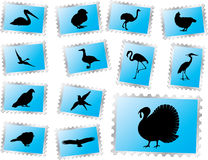 Set stamps - 69. Birds. Set of 13 vector postage stamps for web Royalty Free Illustration