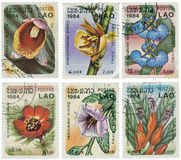 Set of stamps with flowers Royalty Free Stock Photo