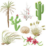 Set of Steppe and Desert Plants Stock Images