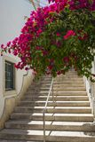 Albufeira in Portugal. A set of steps and beautiful cascading flowers in the quaint old town area of Albufeira in Portugal Stock Photography