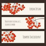 Set of stickers with branches rowan berry Royalty Free Stock Photography