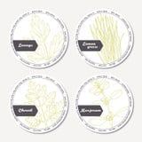Set of stickers for package design with lovage, lemongrass, chervil, marjoram vector illustration