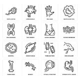 Set of Stomach with Liquids, Eyeball Structure, Human Bone, Three Bacteria, Basophil, Abdomen, DNA Sequence, Men Hand, Fertilizati. Set Of 16 simple  icons such Royalty Free Stock Photo