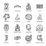 Set of Stomach with Liquids, Human Fetus, Spine, Trachea, Tonsil, Basophil, Lymphonodus, Digestive System, DNA Sequence icons. Set Of 16 simple  icons such as Stock Images