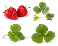 Set of Strawberries with leave Stock Photo