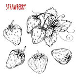 Set strawberry drawing. Strawberry on a white background. Vector Stock Photo
