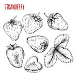 Set strawberry drawing. Strawberry on a white background. Vector Royalty Free Stock Photography