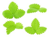 Set of strawberry leaves isolated on a white. Detailed retouch stock images