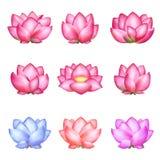 Set stubarwni lotuses Zdjęcia Royalty Free