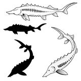 Set of sturgeon vector illustrations Royalty Free Stock Photos