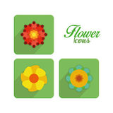 Set Of Stylish Colorful Flowers Icons Isolated Royalty Free Stock Photos