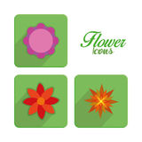 Set Of Stylish Colorful Flowers Icons Isolated Royalty Free Stock Images