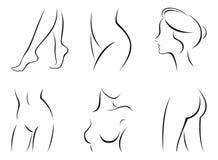 Set of stylized body parts. Vector illustration of set of stylized female body parts Stock Photos
