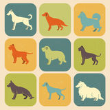 Set of stylized colored  icons of dog breeds Royalty Free Stock Photos