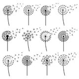 Set of stylized dandelions blowing isolated. Set of black dandelions blowing isolated on white background. Stylized summer or spring flowers with flying fluff Stock Photo
