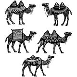Set of stylized figures of decorative Camels Royalty Free Stock Images