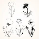 Set of stylized flowers dandelions. Vector, ink, sketch vector illustration