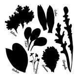 Set of stylized hand-drawn leaves of different varieties of lettuce. Style for eco-store, cafe, restaurant. Silhouette. Vector illustrations Royalty Free Stock Images