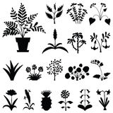 Set of stylized houseplants' silhouettes. Stock Photos