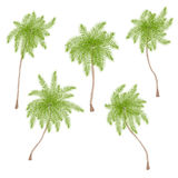 Set of stylized palm trees isolated on white royalty free stock photo