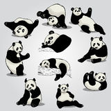 Set of stylized pandas in different positions Stock Image